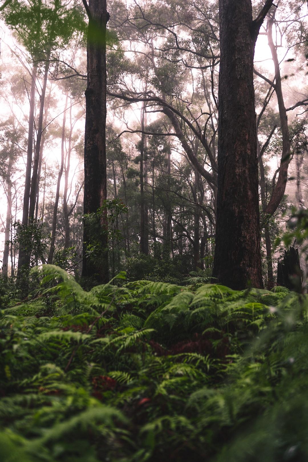 Deep in the forest Follow Instagram @_stuartdavies