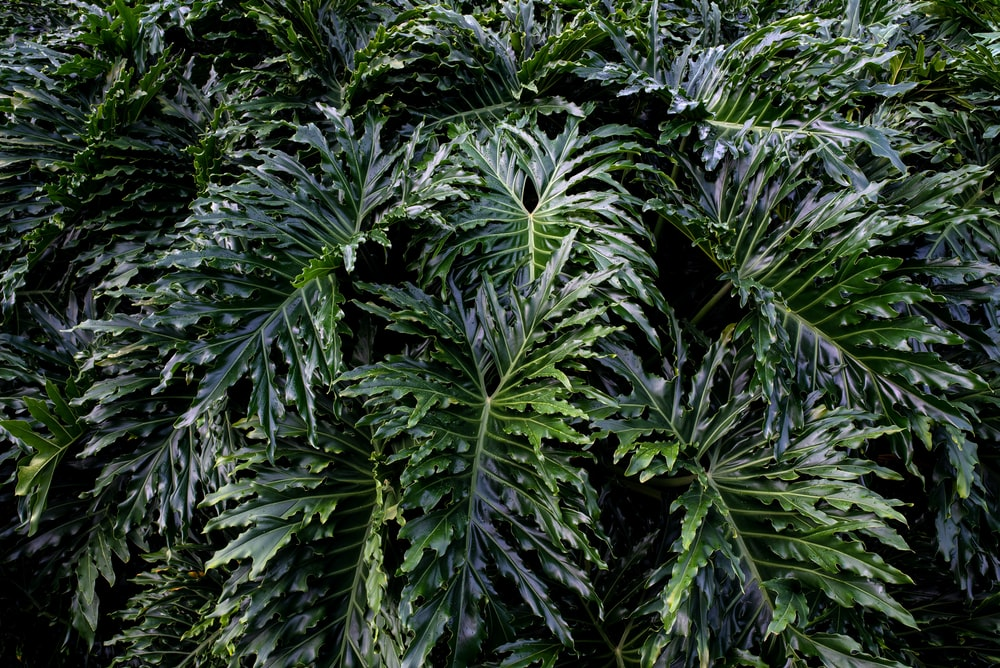 green leaf plants during daytime