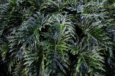 green leaf plants during daytime leafy teams background