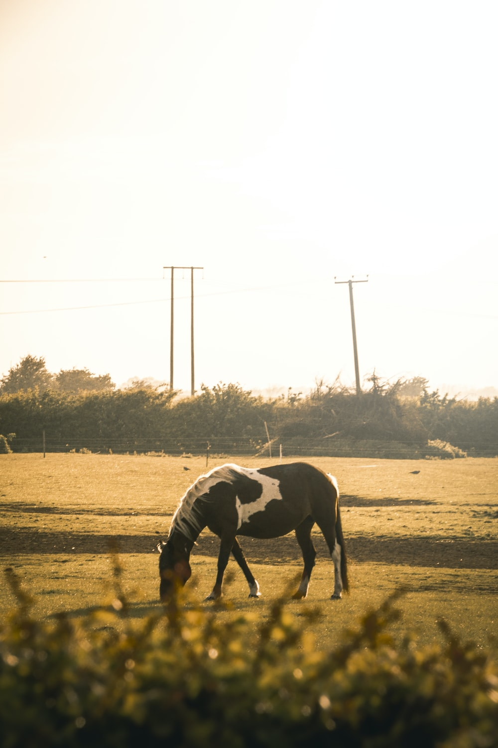 black and white horse running on brown field during daytime