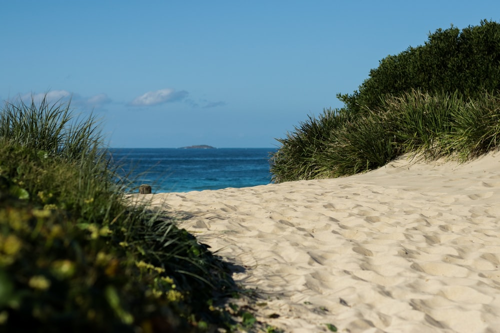 green grass on white sand near blue sea under blue sky during daytime