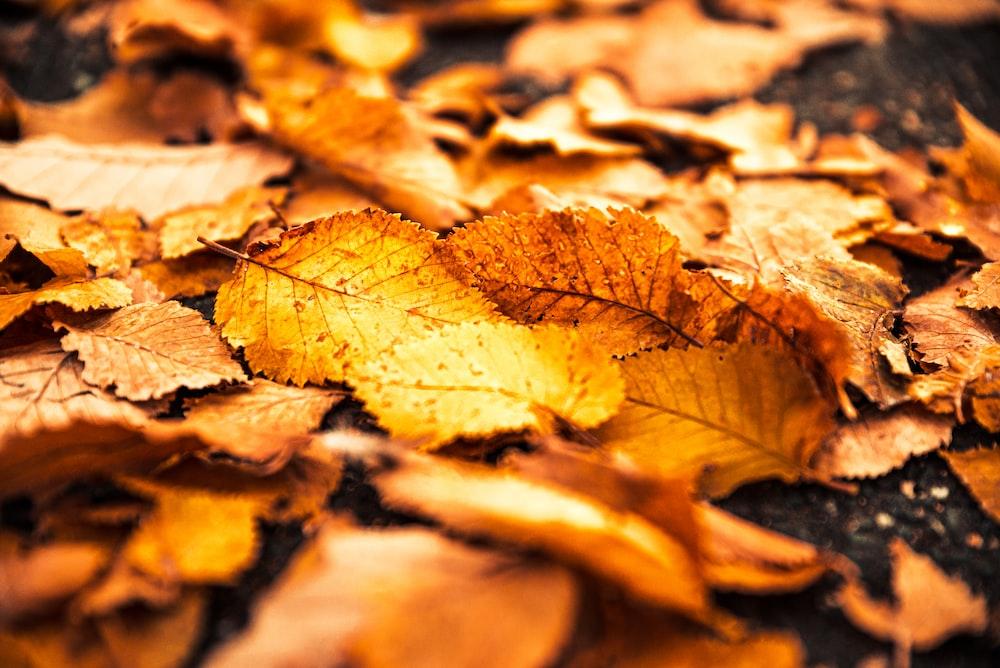 brown dried leaf on ground