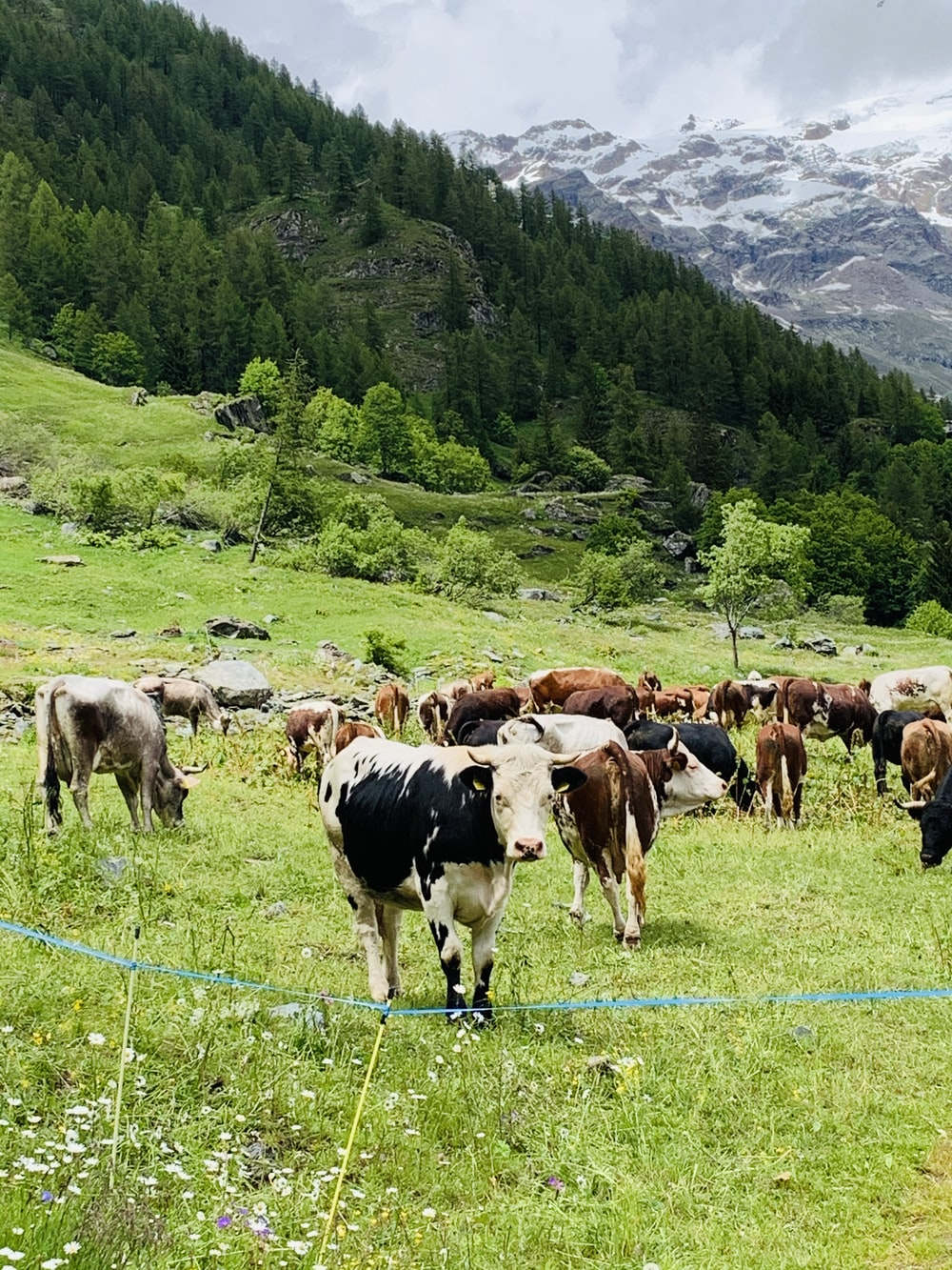 herd of cows on green grass field during daytime