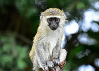 brown and white monkey on tree branch during daytime