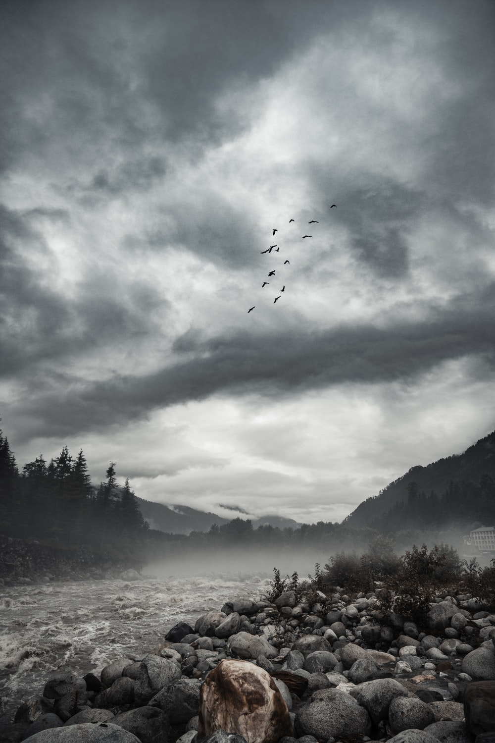 birds flying over the trees and mountains during daytime