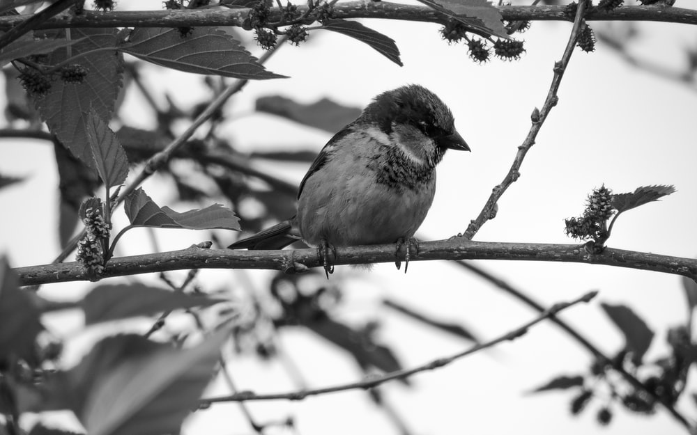 grayscale photo of bird on tree branch