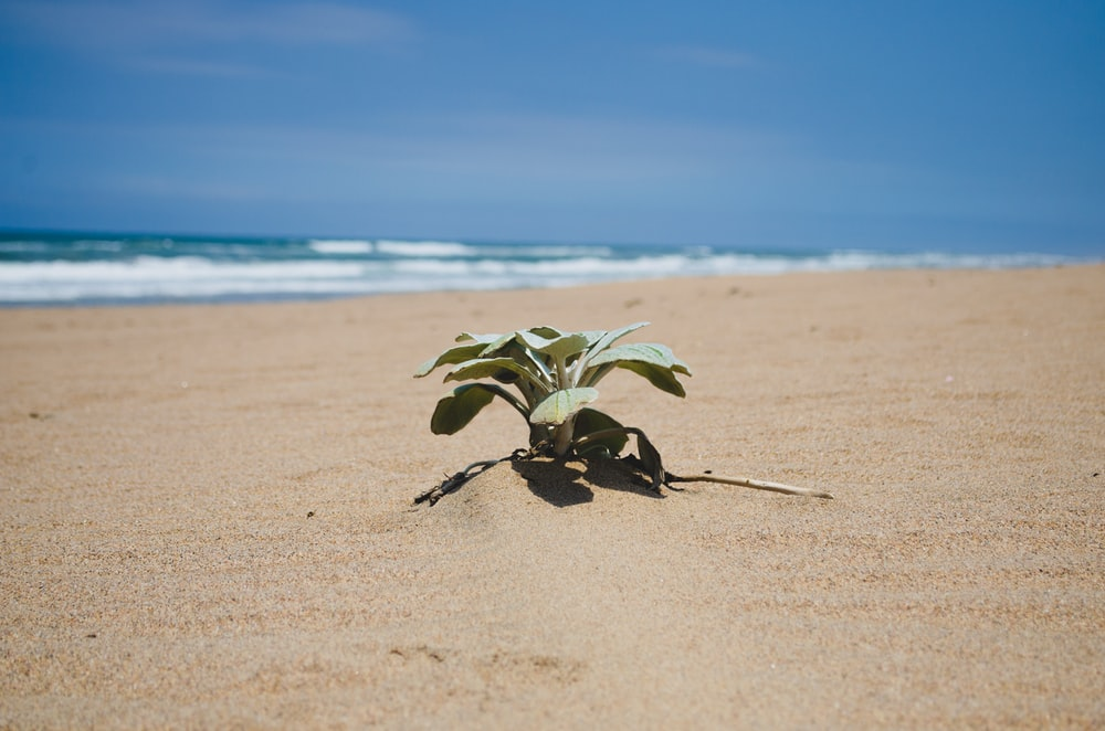 green plant on brown sand near sea during daytime