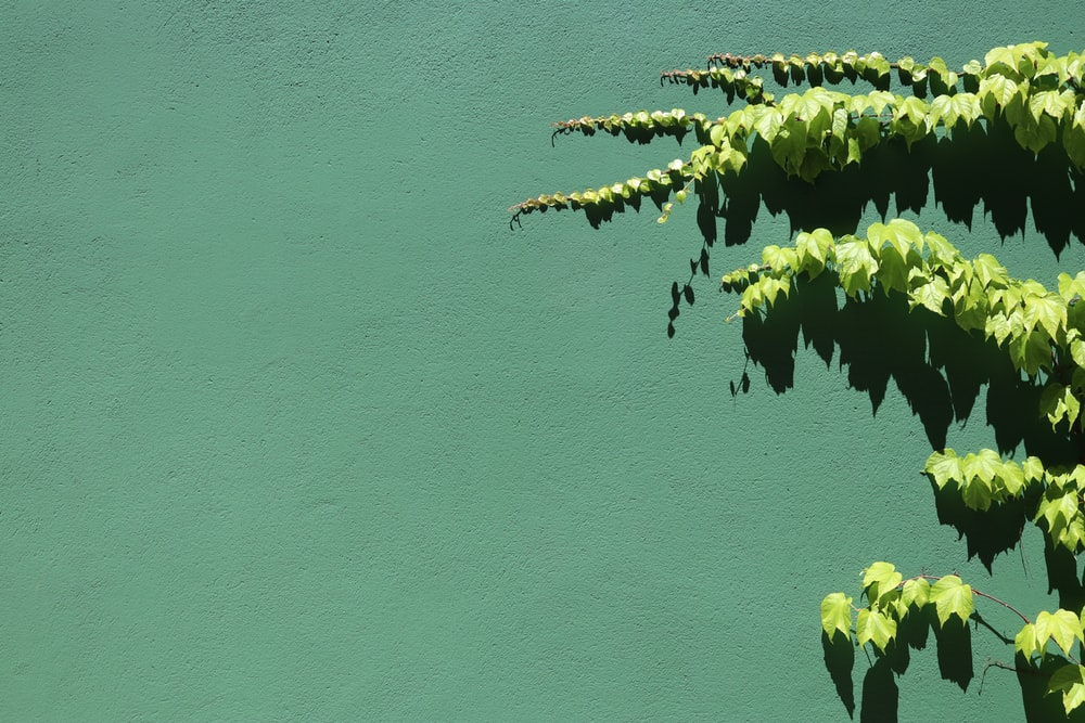 green plant on blue painted wall