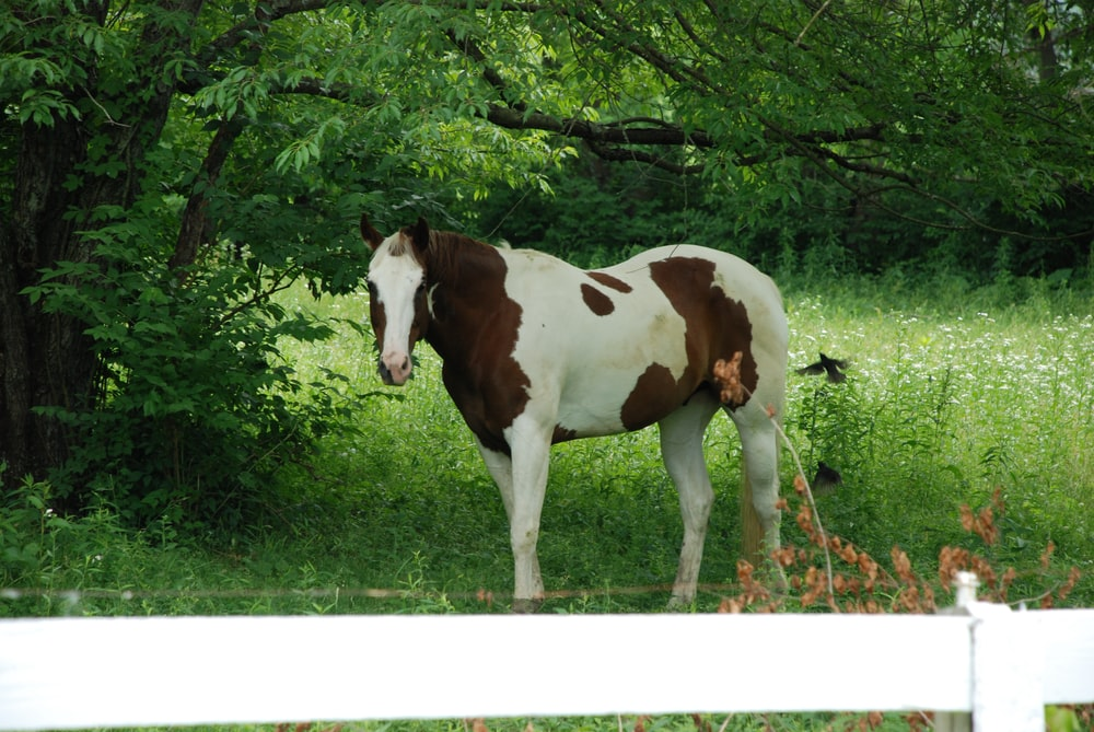 brown and white horse eating grass
