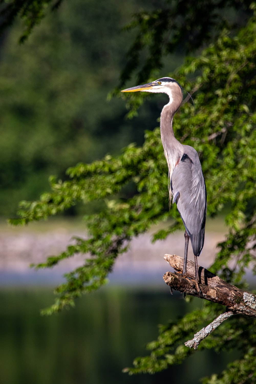 gray bird on brown tree branch during daytime