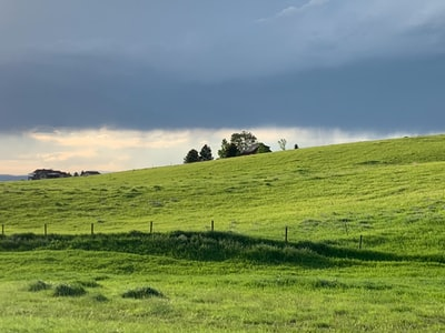 green grass field under white clouds during daytime montana teams background