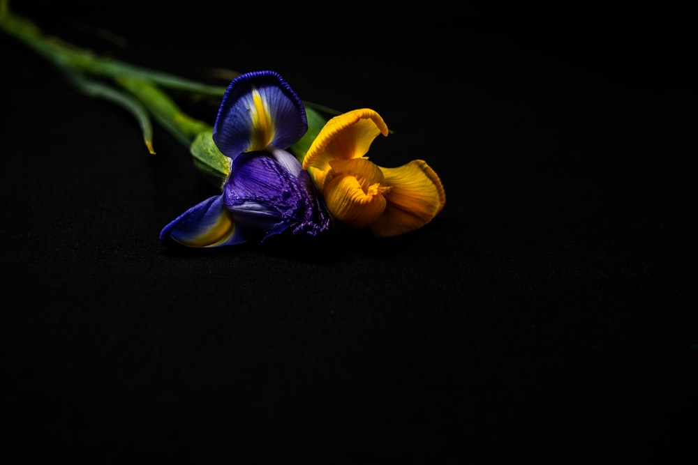purple and yellow flower on black surface