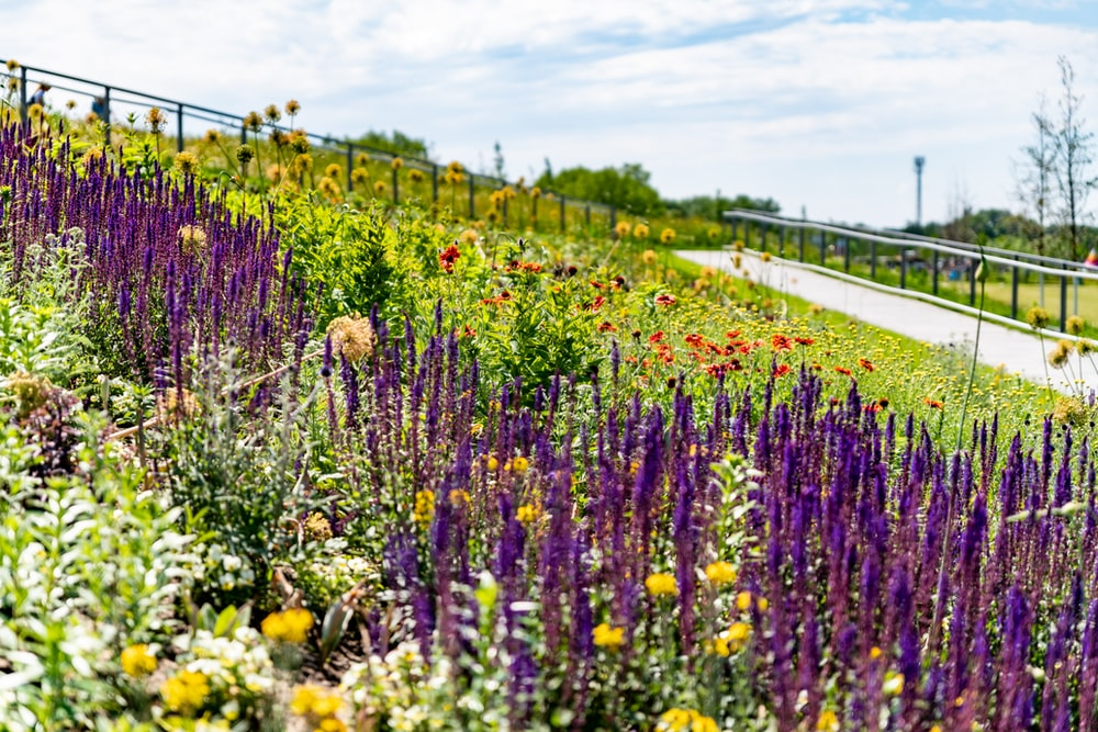 yellow and purple flower field during daytime