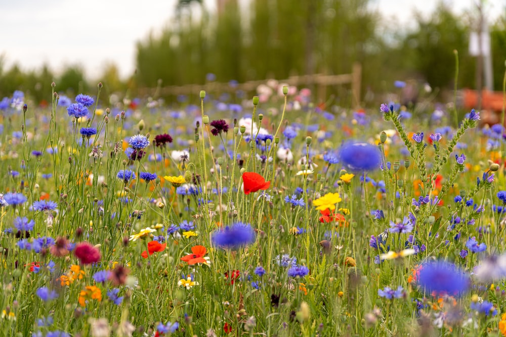 red and blue flowers on green grass field during daytime