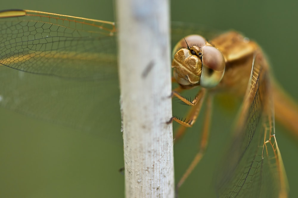 brown dragonfly perched on white concrete post during daytime
