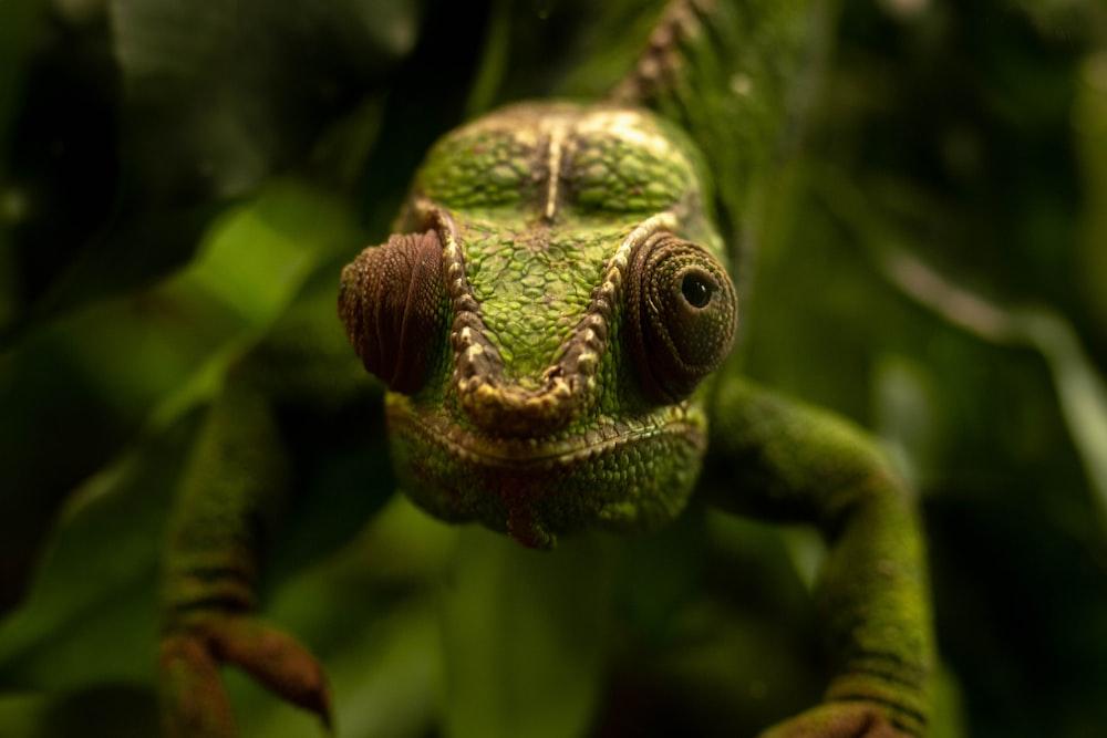 green chameleon on green tree branch