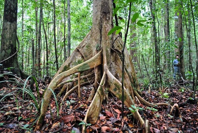 brown tree trunk surrounded by brown leaves brunei teams background