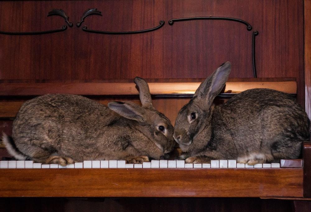 gray rabbit on brown wooden shelf