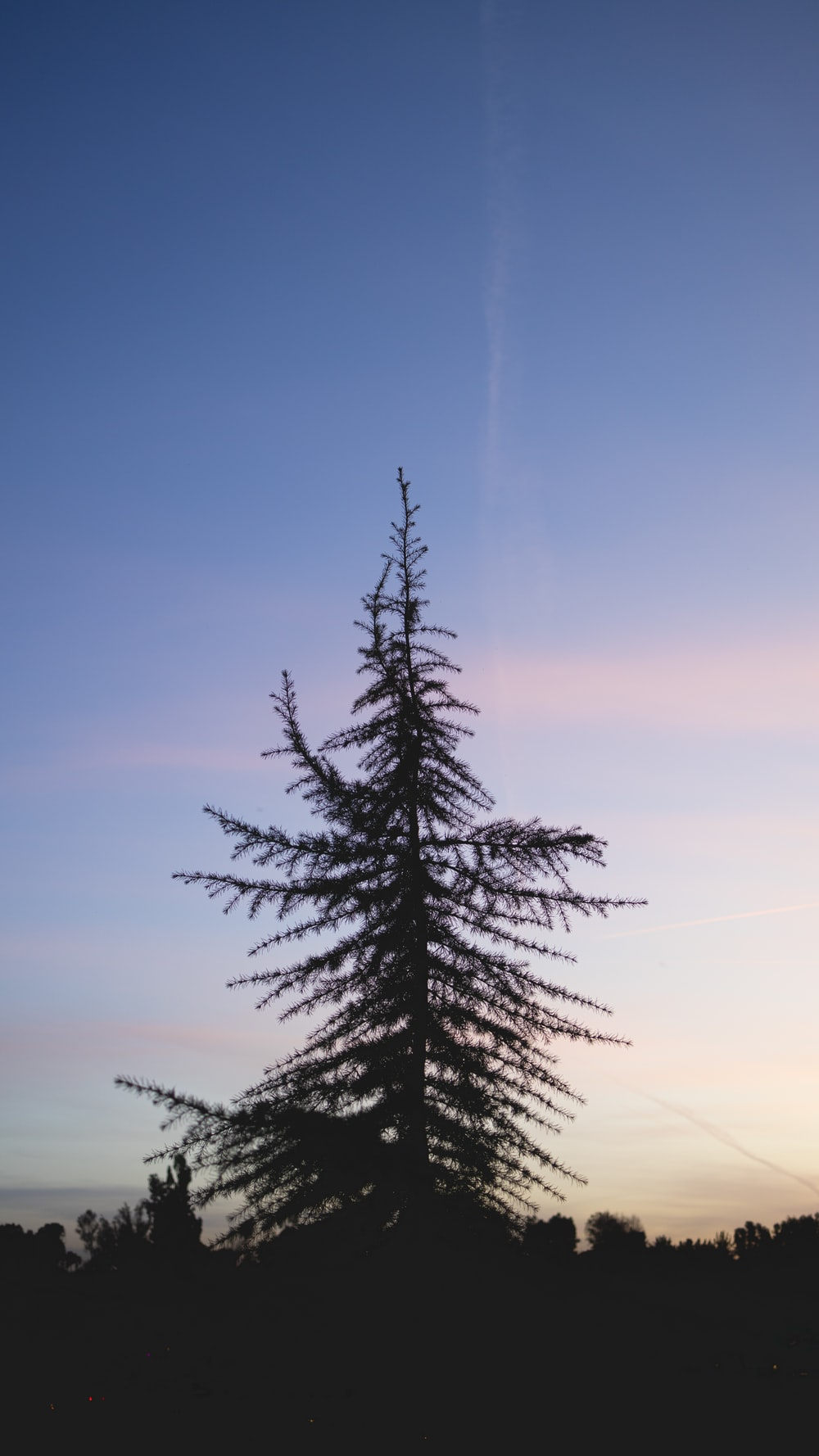 green pine tree under blue sky during daytime