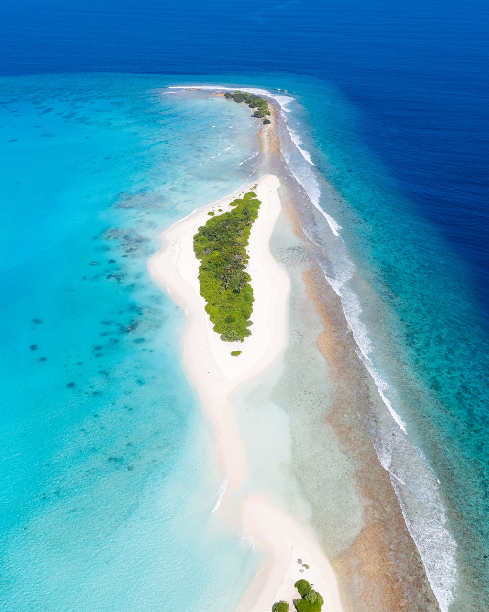 aerial view of green trees on brown sand beach during daytime