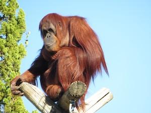 brown monkey on brown wooden stick during daytime