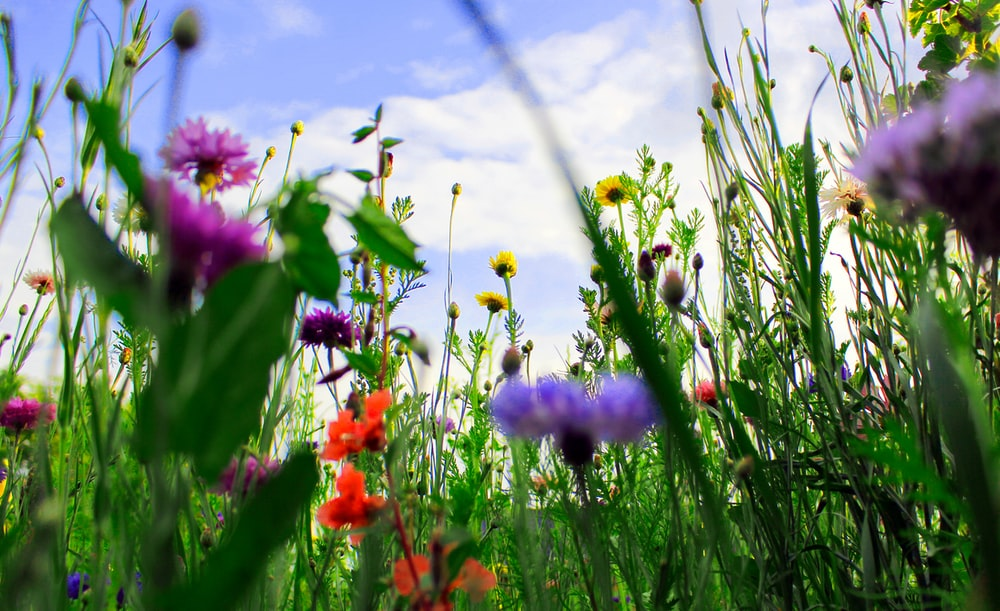 red and purple flowers under blue sky during daytime