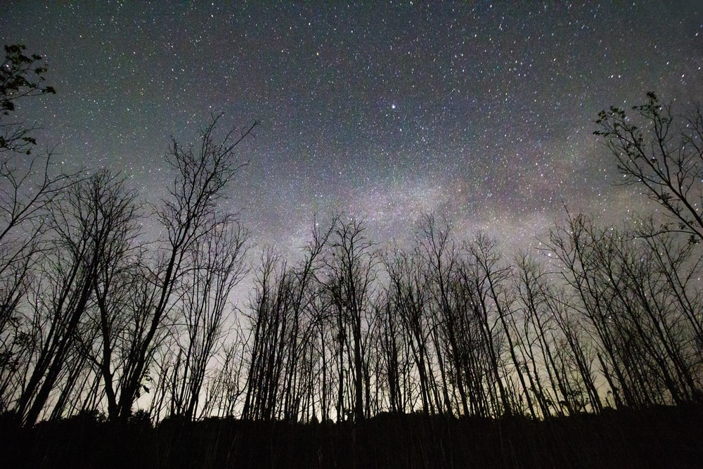 bare trees under starry night