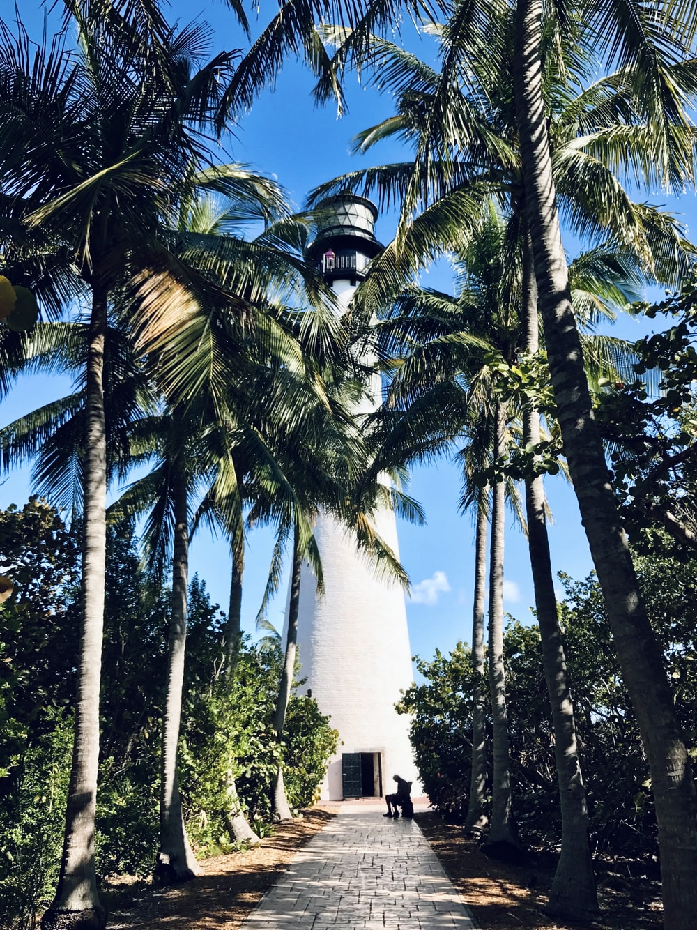 white concrete tower between palm trees