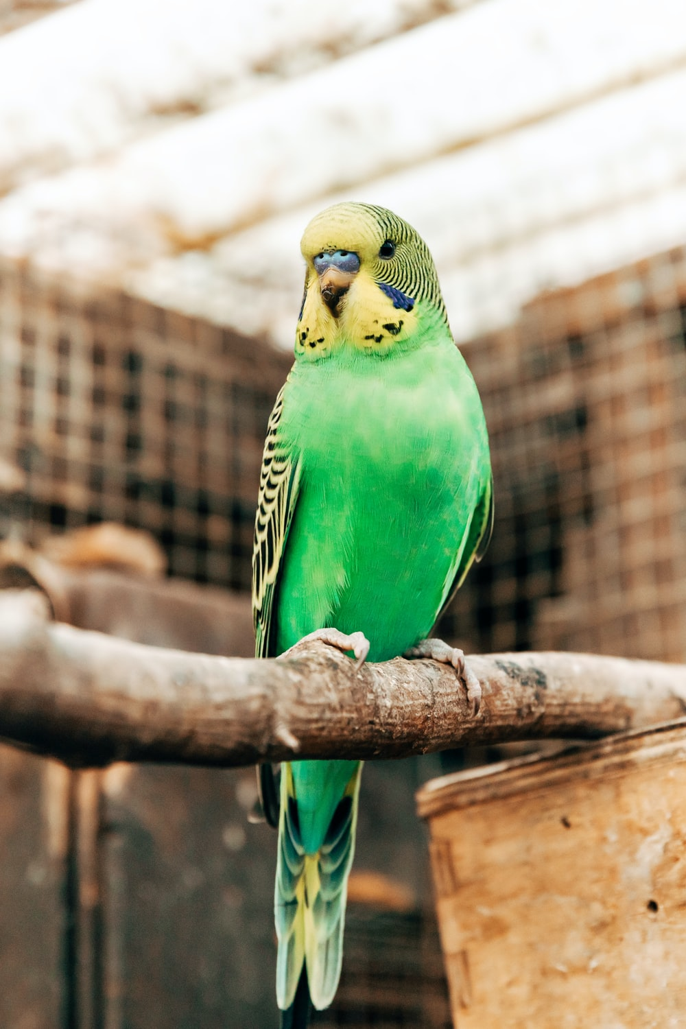 green and yellow bird on brown tree branch