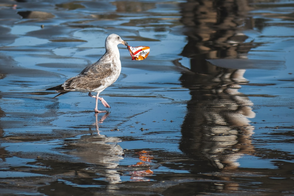 white and gray bird on water during daytime