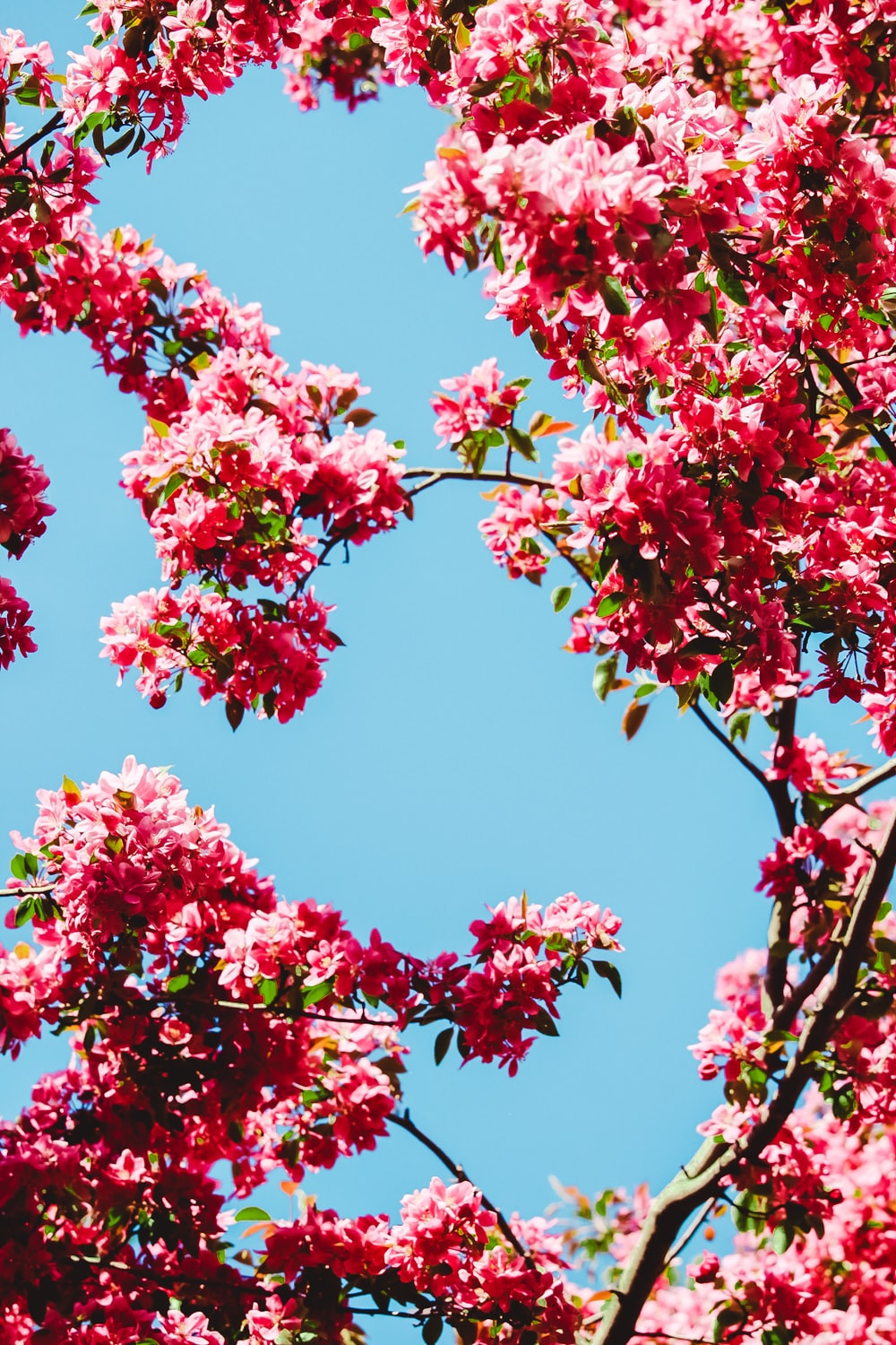red and green leaf tree under blue sky during daytime