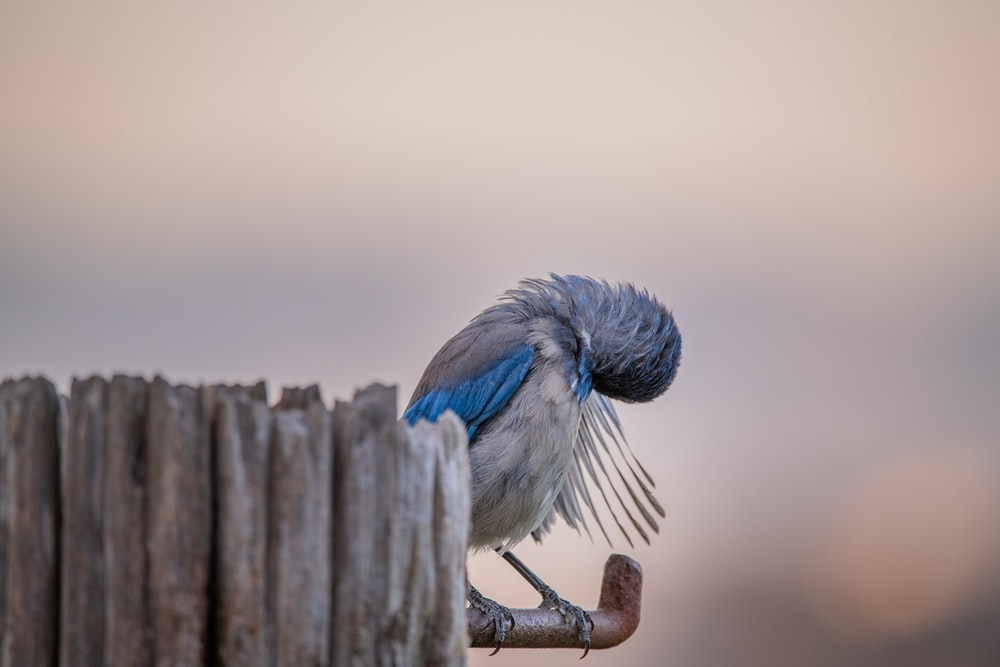 blue and white bird on brown wooden fence during daytime