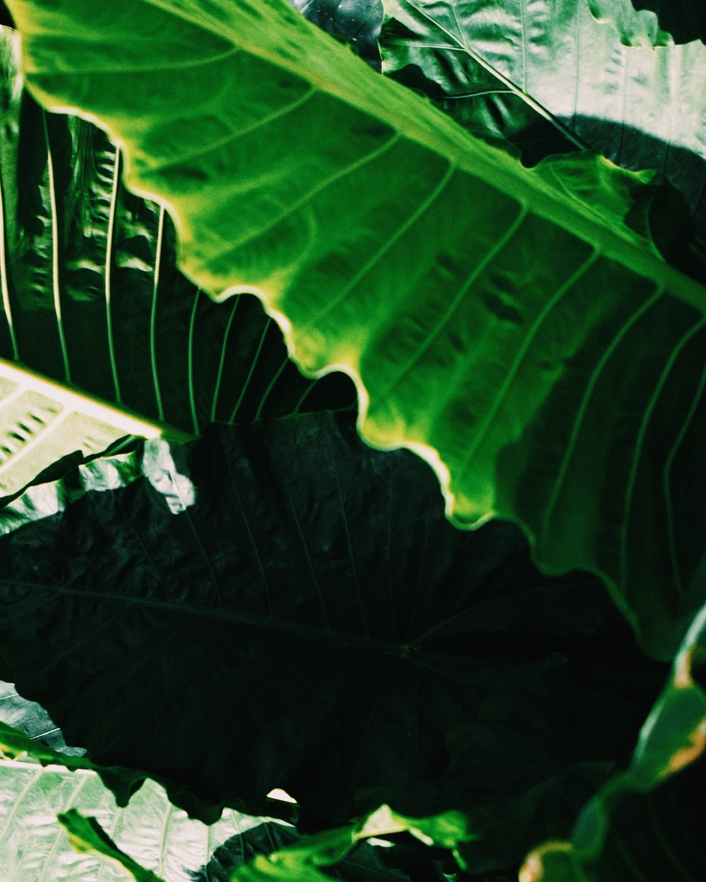 green banana leaf during daytime