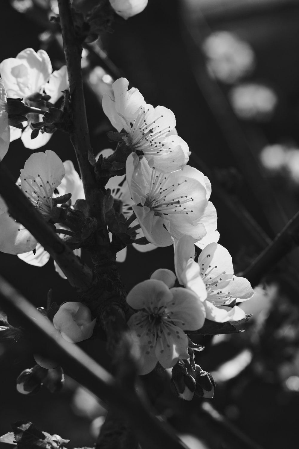 grayscale photo of flowers in bloom