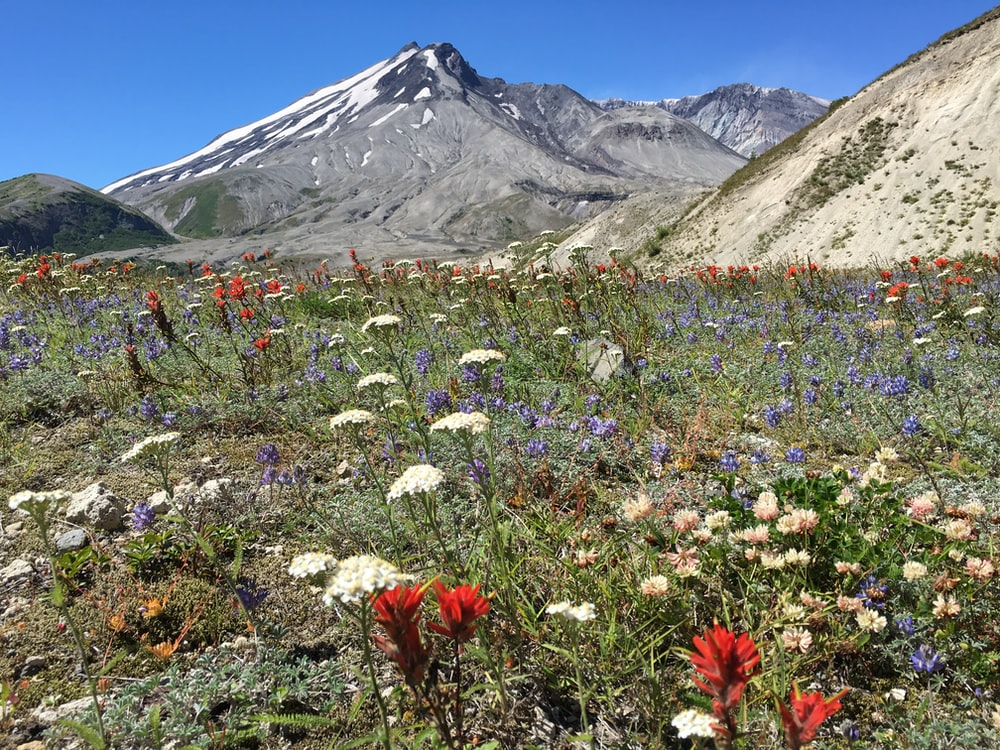 white and pink flowers near mountain under blue sky during daytime