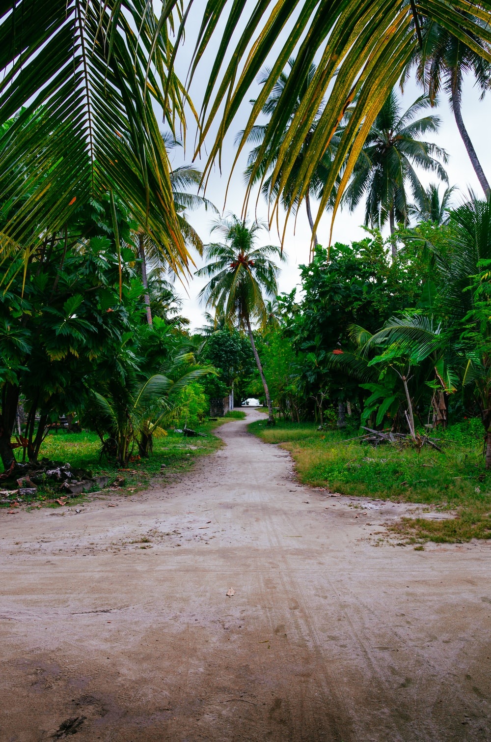 green palm trees near road during daytime