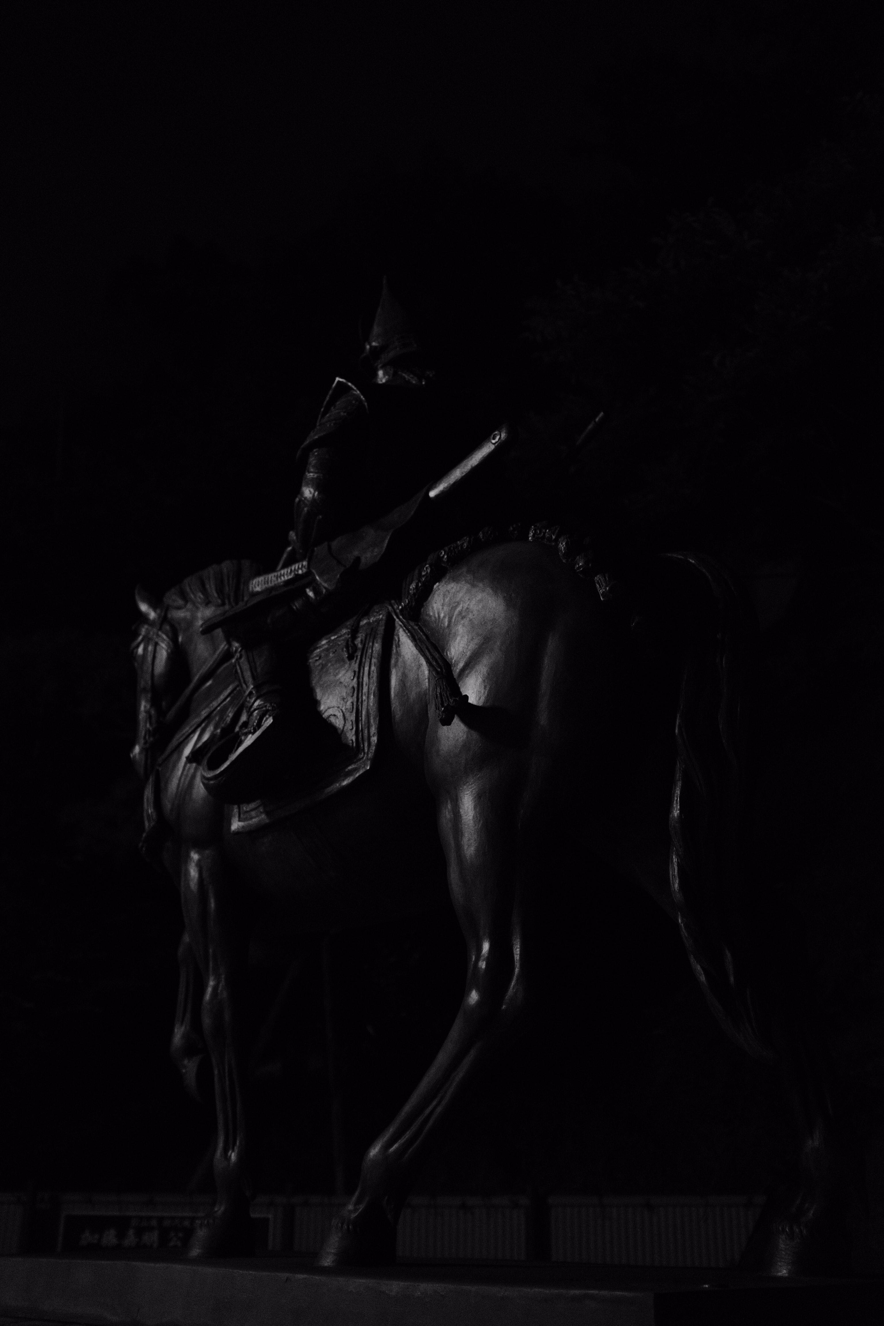 Black Horse With Black Background Photo Free Animal Image On Unsplash