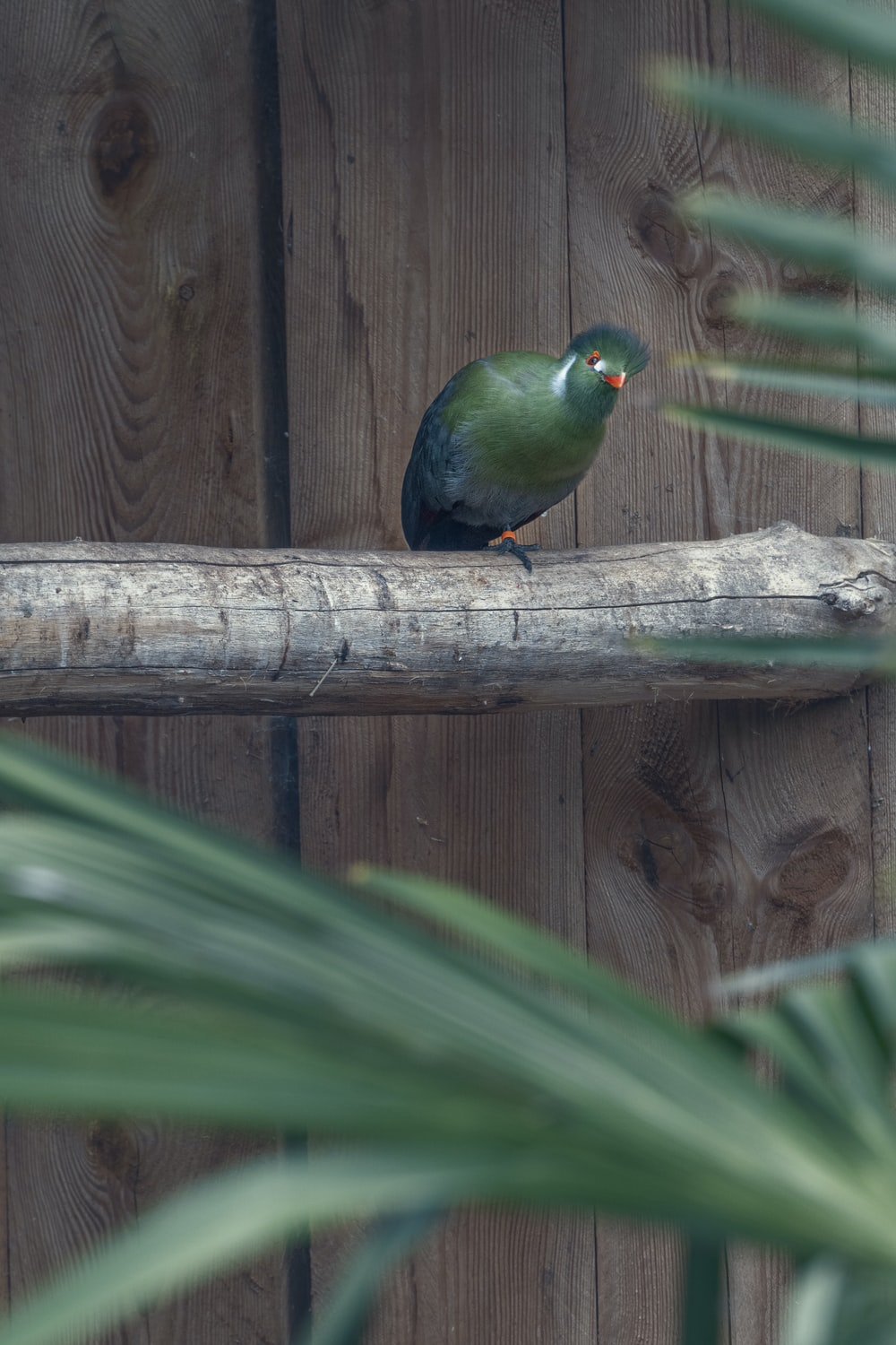 blue and green bird on brown wooden branch