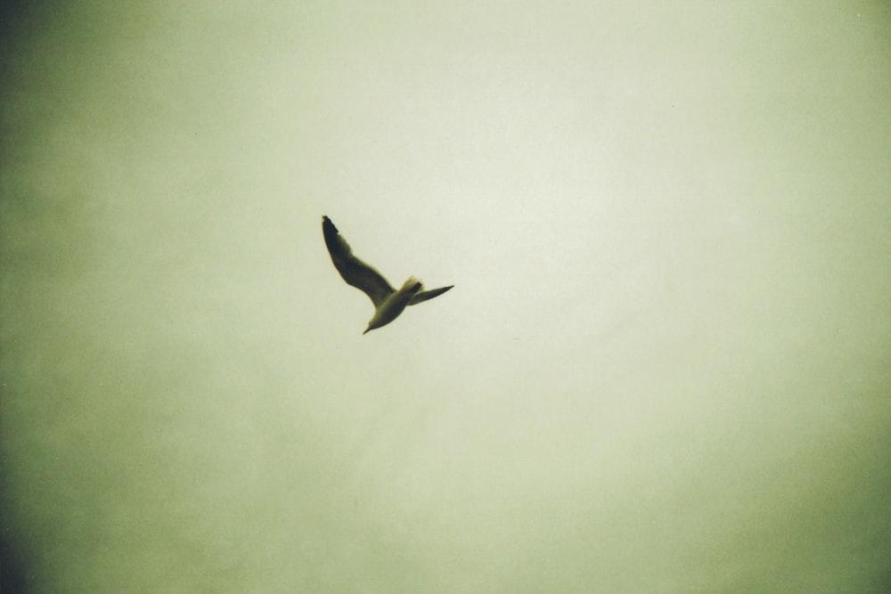 black bird flying on sky