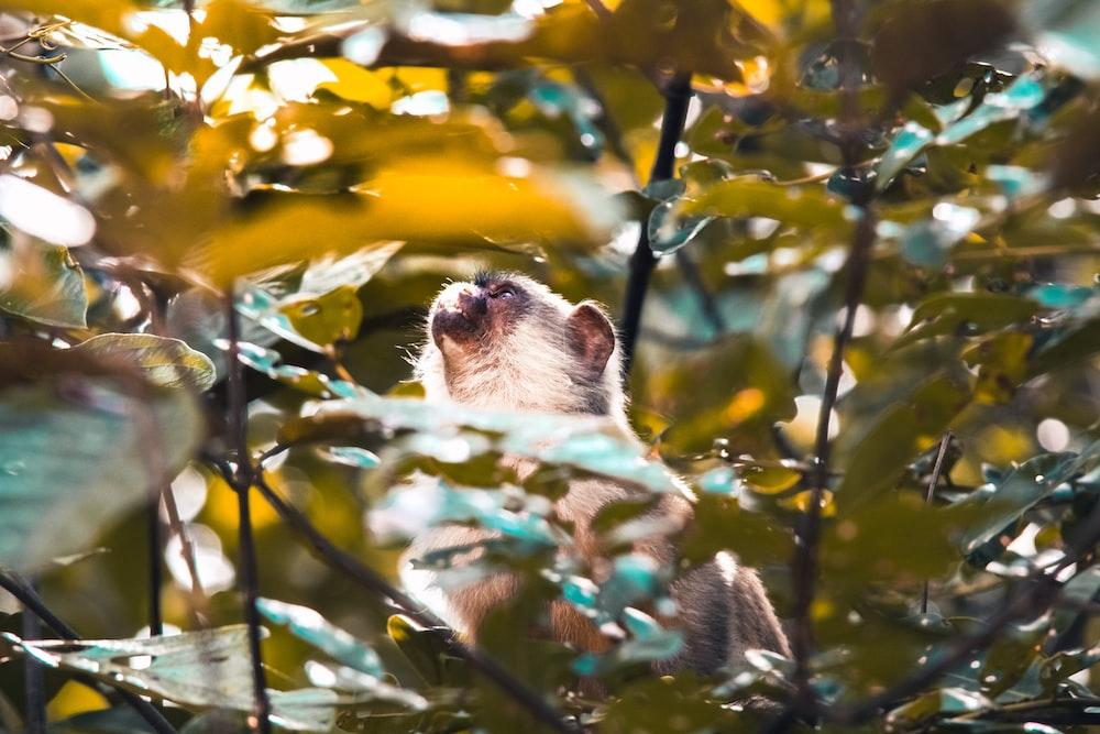 white long coated small sized dog on tree