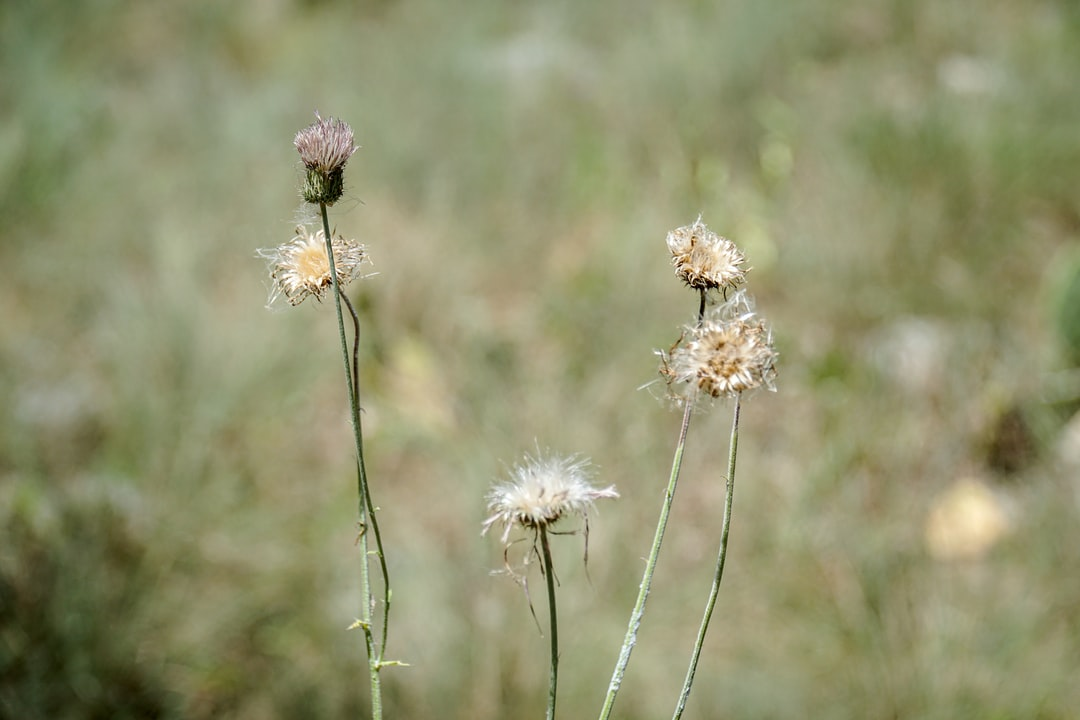 Dry flowers in a hot arid climate