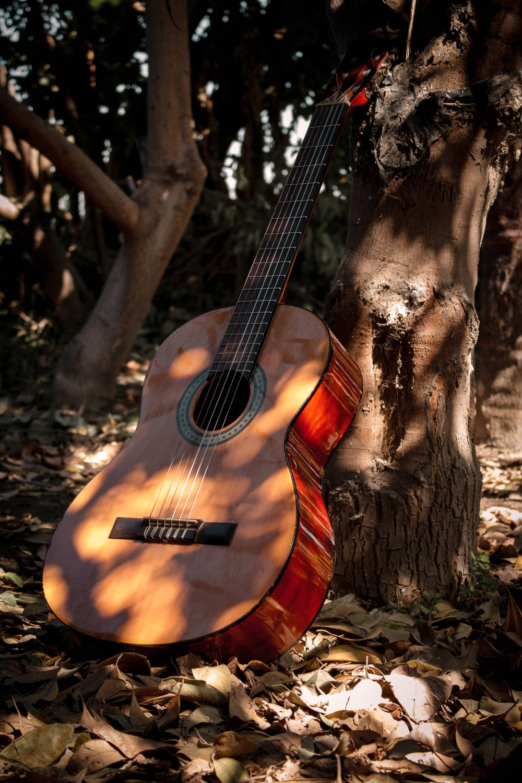 brown acoustic guitar on brown tree trunk