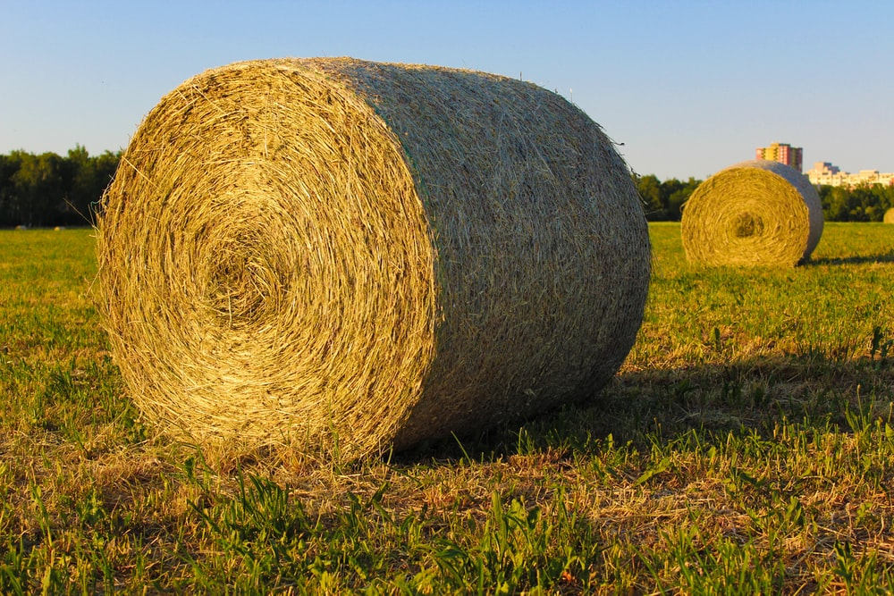 brown round grass on green grass field during daytime
