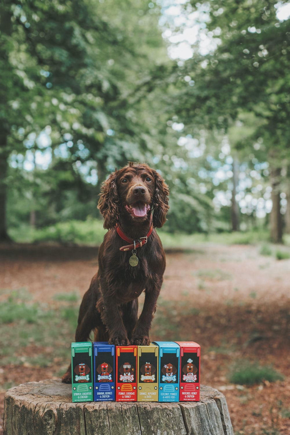 brown short coated dog on blue and red plastic toy