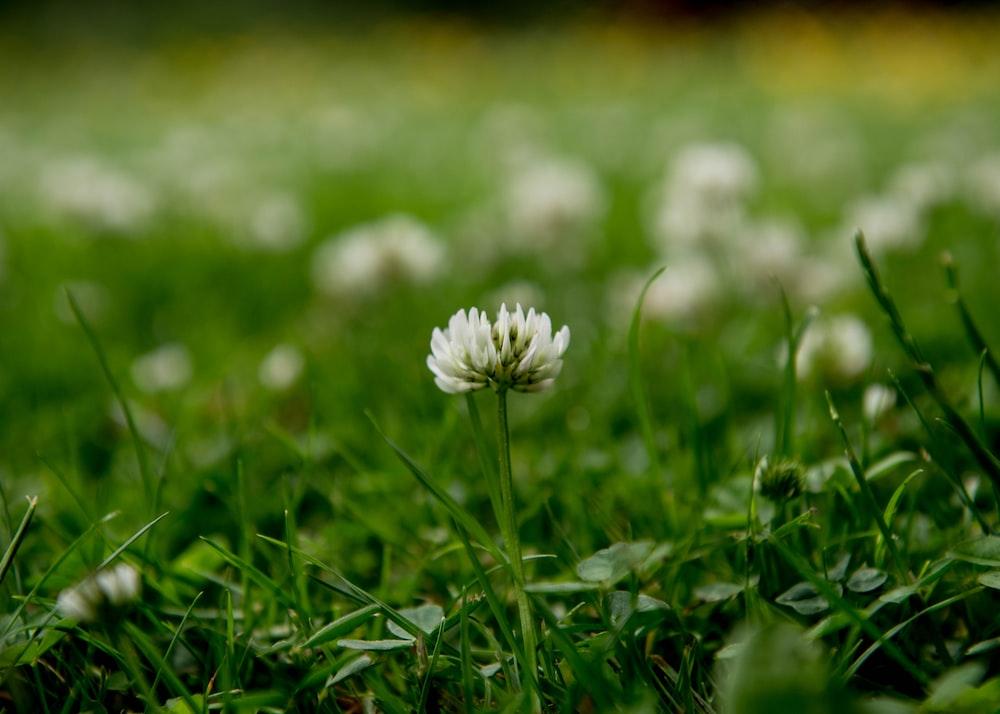 white flower on green grass during daytime