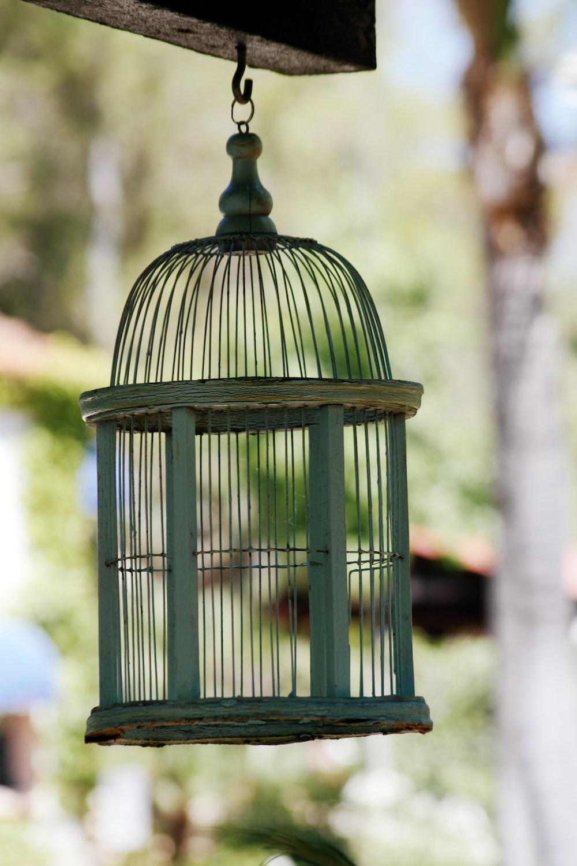 green steel bird cage during daytime