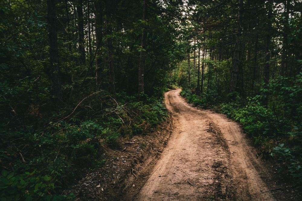 brown dirt road in the middle of forest during daytime
