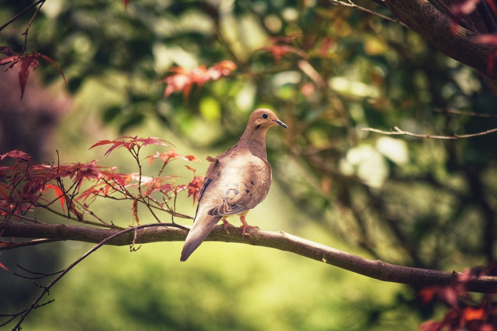 gray and white bird on brown tree branch during daytime