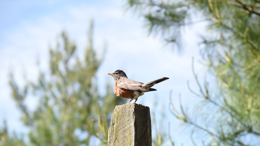 brown and gray bird on brown wooden fence during daytime