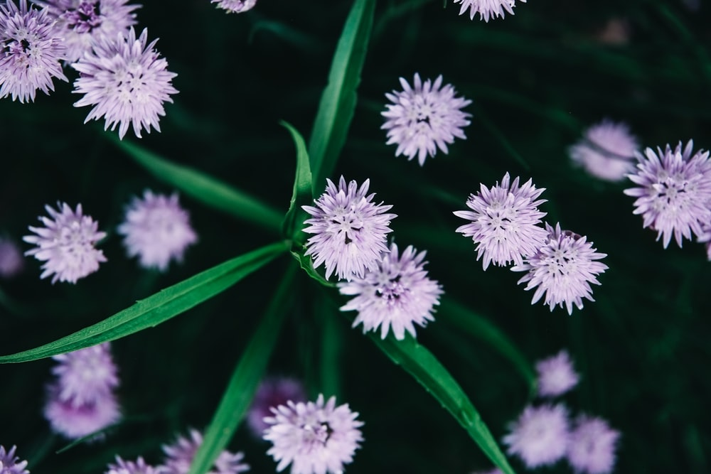 purple and white flower in macro lens photography